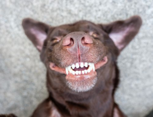 Tips for your Pet's Oral Health